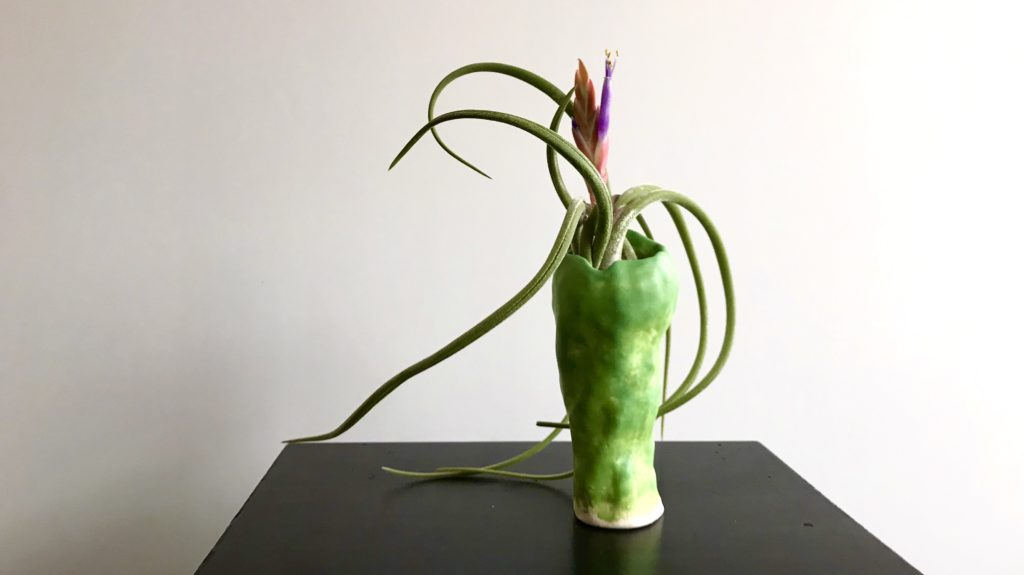 view of the bloom of an airplant in a hand made vase available at The Virginia Farmhouse